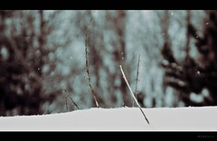 Land Before Time (MIRELLAJUPIC) Tags: wood snow plant window forest dead outside photo sticks small twig snowing