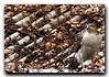 شاهین-Falcon (TohidV) Tags: falcon باز شکار شاهین