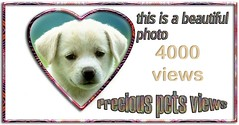 precious pet pics 4000+ views