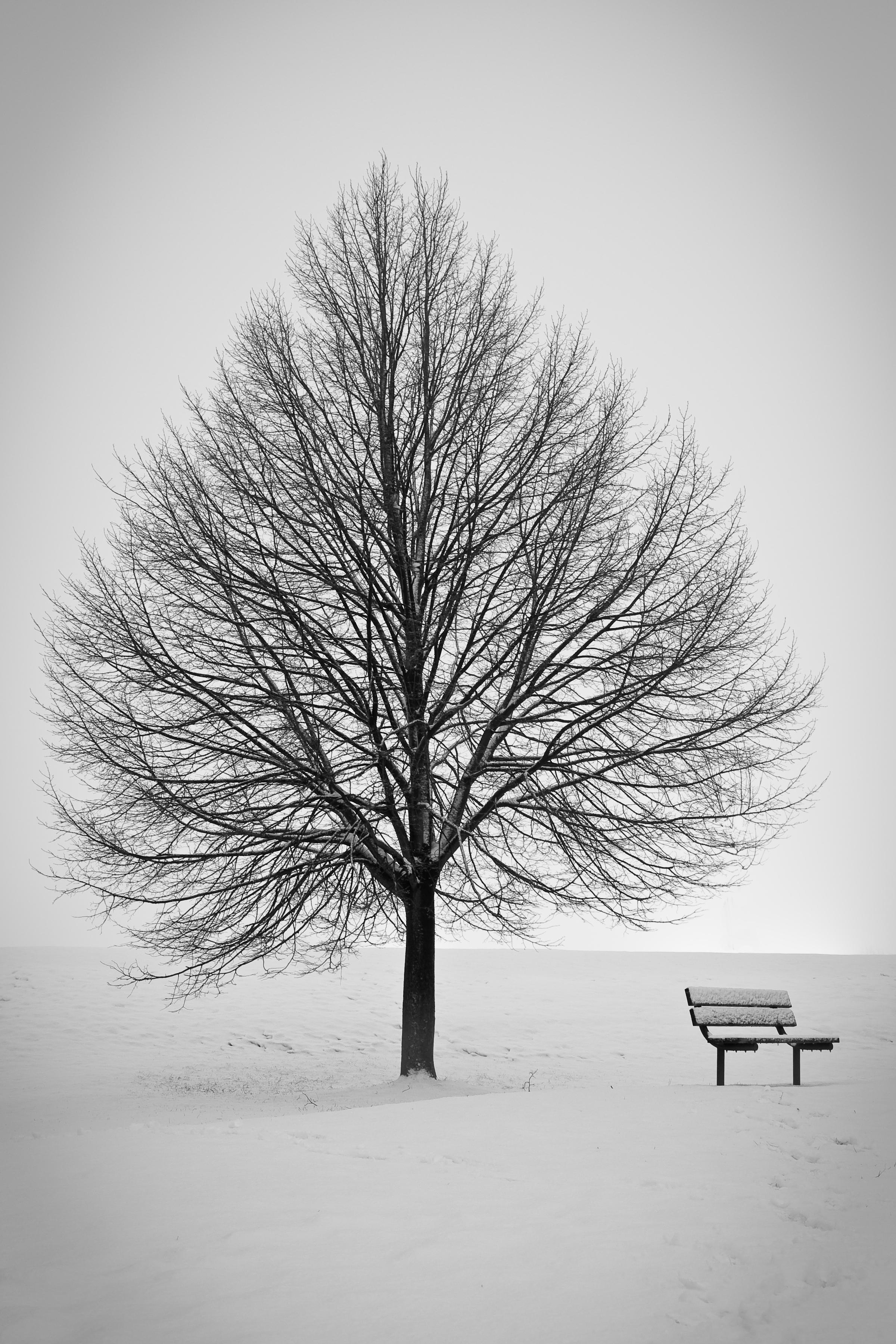 雪景色の中にたたずむ木とベンチ