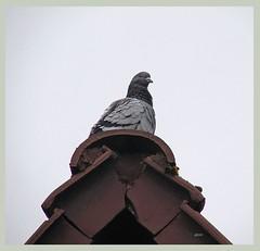 Die Taube auf dem Dach ist besser als...? Da war doch irgendetwas?