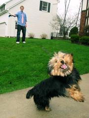 (ohmann alianne) Tags: love puppy jump jon jay action flash bailey haha yikes actionshot