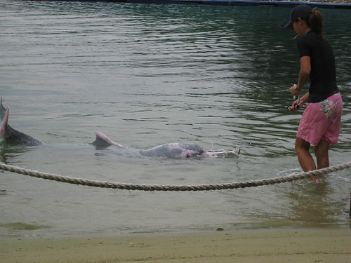 singapore dolphin lagoon