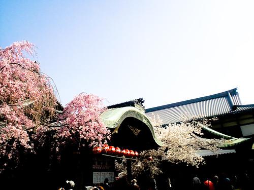 Miyako-Odori