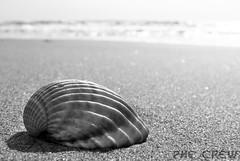on the beach (PheCrew) Tags: photoshop phe soken