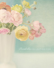 Gratitude (Shana Rae {Florabella Collection}) Tags: life flowers light stilllife white art texture still nikon colorful thankyou sunday blossoms 85mm naturallight vase lidia testimonial d300 ranunculas florabella ohsoposh shanarae