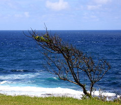 Branched out (Lady Jayne ~) Tags: ocean blue branches australia nsw centralcoast norahhead