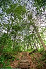 Steps to Green (MattPenning) Tags: trees green landscape pentax sigma hdr lincolnpark springfieldillinois mattpenning photomatixpro kmount sigma1020mmf456exdc k20d penningphotography justpentax springfieldparks pentaxk20d