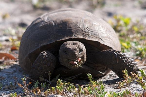 turtle_0035