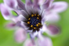 :) (holidayslush) Tags: pentax sigma 50mm f28 macro florida flowers flower flor flores fiori flora garden jardin nature