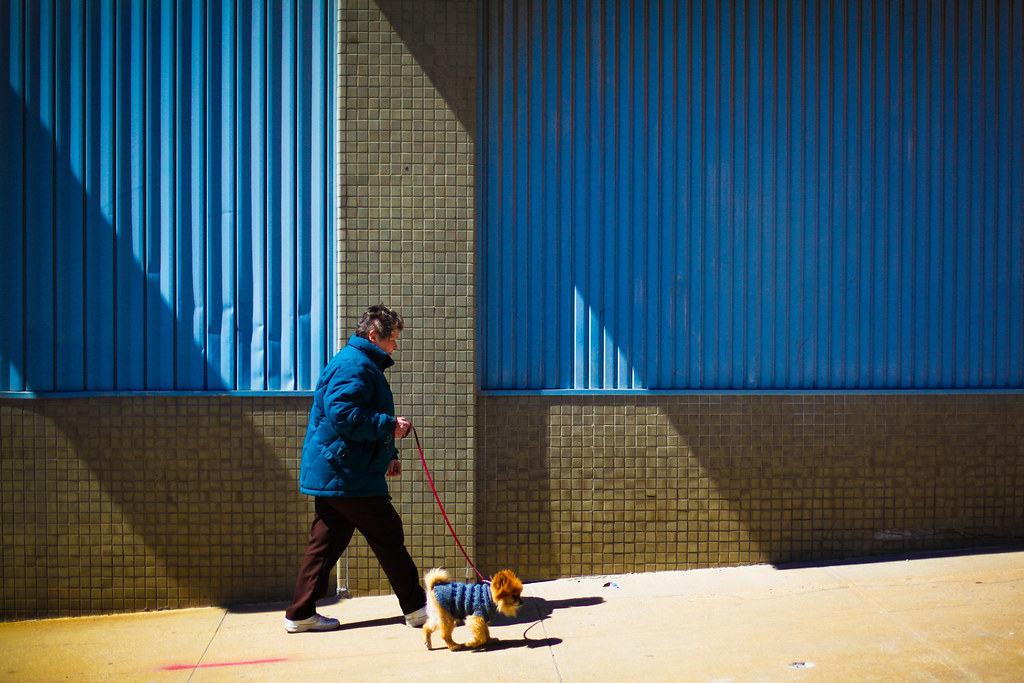 Sidewalk Pomeranian