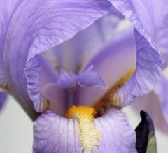 zenith 003 (A2L) Tags: flower youvsthebest thepinnaclehof
