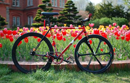 チューリップと自転車