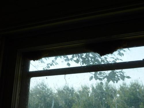 honeycomb in windows
