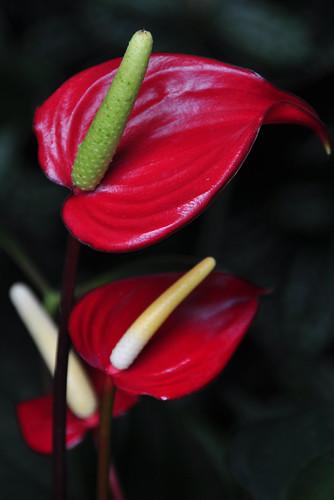 Botanical Garden 038_edited-1