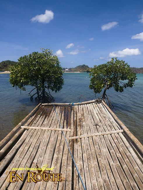 Grace Island Mangrove Duo