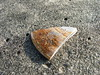Part of a Seashell on Coronado Beach