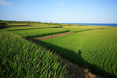 Paddy Field,Taiwan (Arte Lee) Tags: light shadow sky green nature canon landscape rice taiwan  paddyfield                                  2 139 30