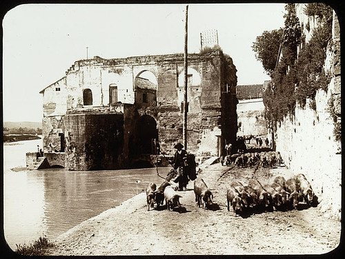 Lestrange. Vue densemble des vestiges sur la rive du Guadalquivir, des bergers mènent un troupeau de cochons sur la berge.