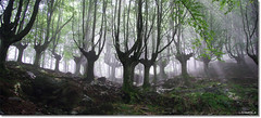 basoa (JM Udakiola) Tags: light forest europe magic atmosphere bosque beech montain basquecountry haya adarra basoa pagoa
