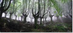 basoa (Jonmi.) Tags: light forest europe magic atmosphere bosque beech montain basquecountry haya adarra basoa pagoa