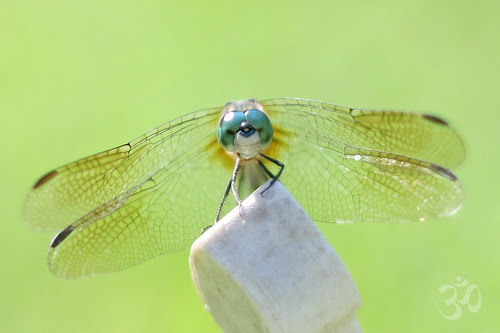 ॐ dragonflyriri ॐ (Limited Flickr Time)님이 촬영한 Everything you can imagine is real.  ~Pablo Picasso.