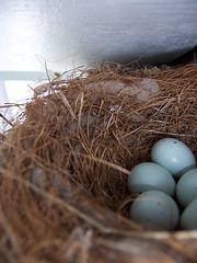 Five eggs by yanajenn, on Flickr