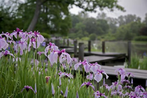 Japanese Garden by Missouri Botanical Garden
