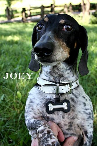 joey summer 2009