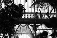 silhouette 160510 (andvic) Tags: plants kewgardens london botanical digitalcameraclub project365