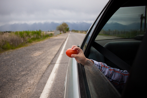 Throwing a Tomato