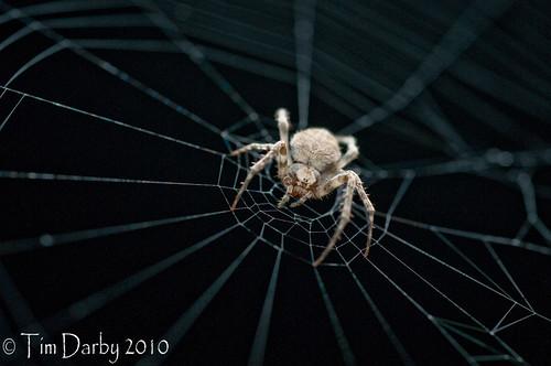 2010-05-22 - Spider-5