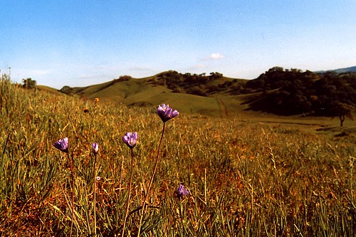 Spring in the open spaces by Brian Murphy, Walnut Creek, Calif.