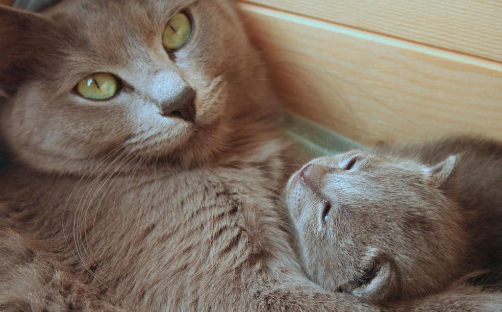Kittens of Pegusha 3186997729_f8023f5139_b