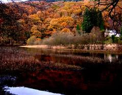 Milton, Loch Ard, the Trossachs 2 (Le Fromagier Extraordinaire) Tags: autumn scotland hill milton trossachs lochard nothisisaverybeautifulpartoftheworld thisisabeautifulpartoftheworld