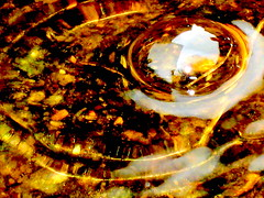 mudpuddle bubble with reflection (sylkyred1) Tags: light brown reflection nature outdoors gold thankyou circles bubble swirls mudpuddle 447 mudpuddlebubblewithreflection explored11209andpickeduptoday11509