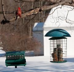 timed feeder