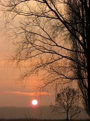 Beautiful morning! (bikkie aldeias) Tags: morning sun tree sol boom arvore morgen zon ochtend musictomyeyes manha diamondheart flickrhearts 25faves123 extraordinarycompositions atardeceramanecer threefaves