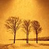 Golden Snowfield (Fusyouzen) Tags: winter light snow tree film landscape gold golden snowfield thesecretlifeoftrees