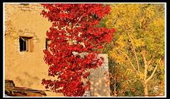 Il Rudere (FIORASO GIAMPIETRO ITALY....) Tags: travel italy europe verona viaggio lagodigarda veneto fioraso giampietro fiorasogiampietro bradolino
