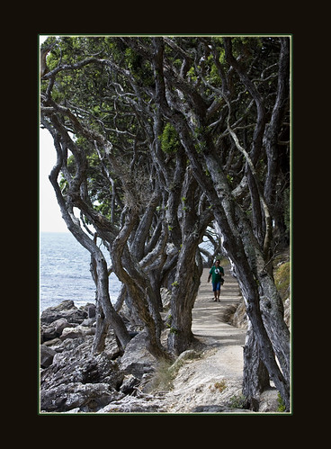 Tauranga walk