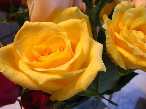 yellow - day 2