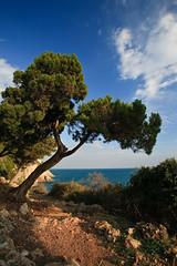 Il sentiero (gab 79) Tags: italy pine landscape mediterranean mediterraneo italia d c n s e l p latina pino canonef1740mmf4lusm cpl italians circeo a themonalisasmile anzipensandocibene melhaproprioaccettata mancaunaalosomanonmelaaccetava
