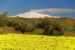 Winter in Sicily (Giuseppe Finocchiaro) Tags: winter yellow volcano nikon giallo sicily inverno etna sicilia vulcano agira aplusphoto