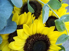 Farmer's Market (Renee Rendler-Kaplan) Tags: flowers summer farmersmarket blossoms sunflowers eucalyptus evanston evanstonfarmersmarket evanstonillinois wonderfulworldofflowers