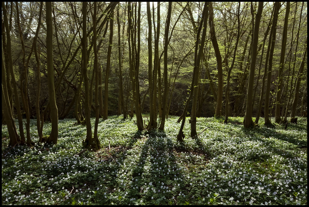 Ancient Woodland Carpet