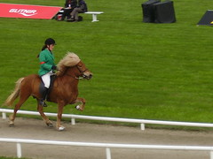 Tlt (Eva Rn) Tags: red horse woman icelandic competing tlt