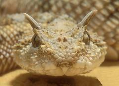 """""""serpientes Venenosas Mexicanas"""" 3444992233_4884bd028f_m"""
