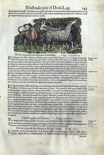 010-De los higados de algunos animales- Pedacio Dioscorides Anazarbeo 1555