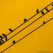 ...nature's musical score! by eRiz SLR